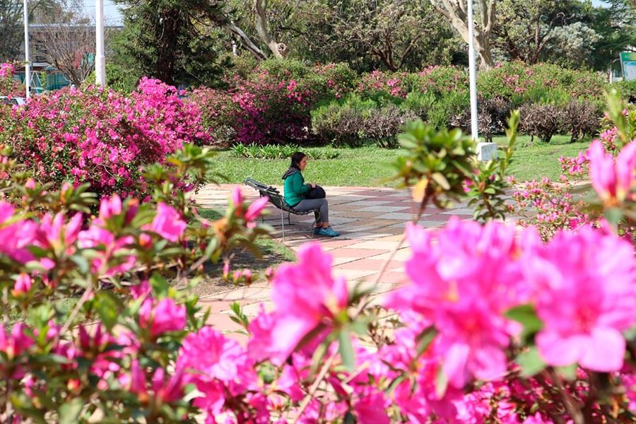 Concurso de parques y jardines
