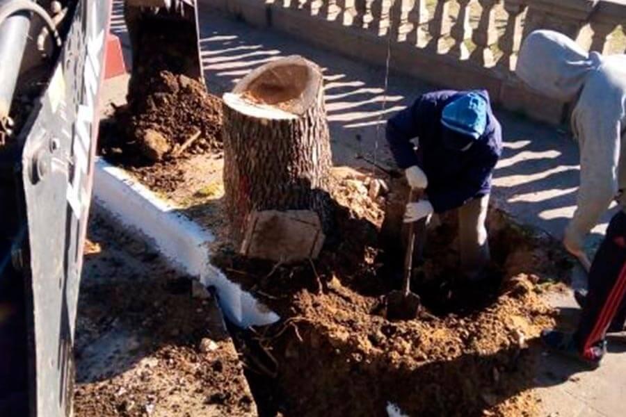 Plantaron lapachos