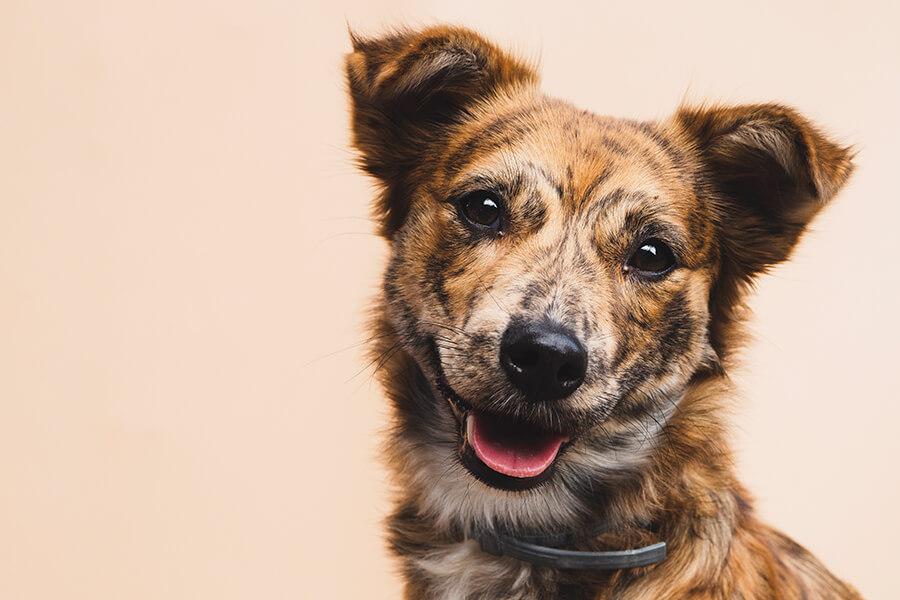 Taller de manejo de perros de refugios