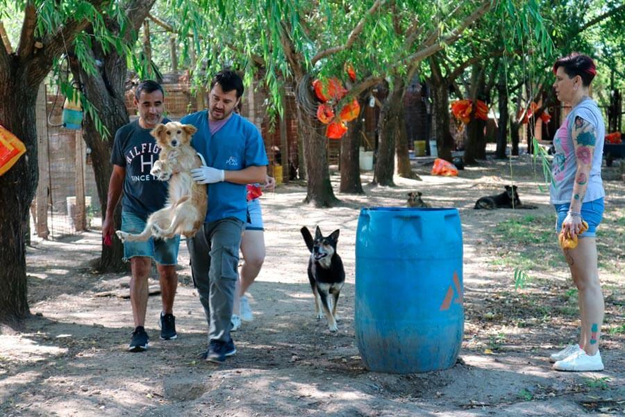 La Municipalidad de Colon amplia el area de zoonosis