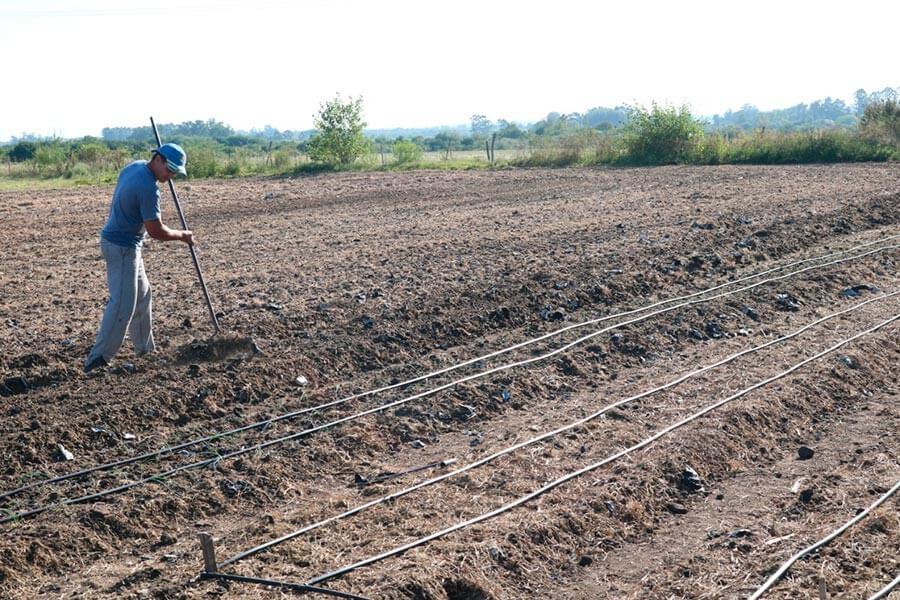 Dirección de Ambiente comenzó con la plantación de hortalizas y verduras