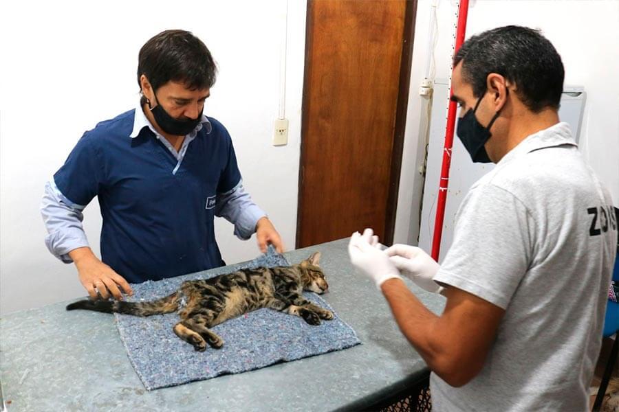 Castraciones municipales en felinos y caninos