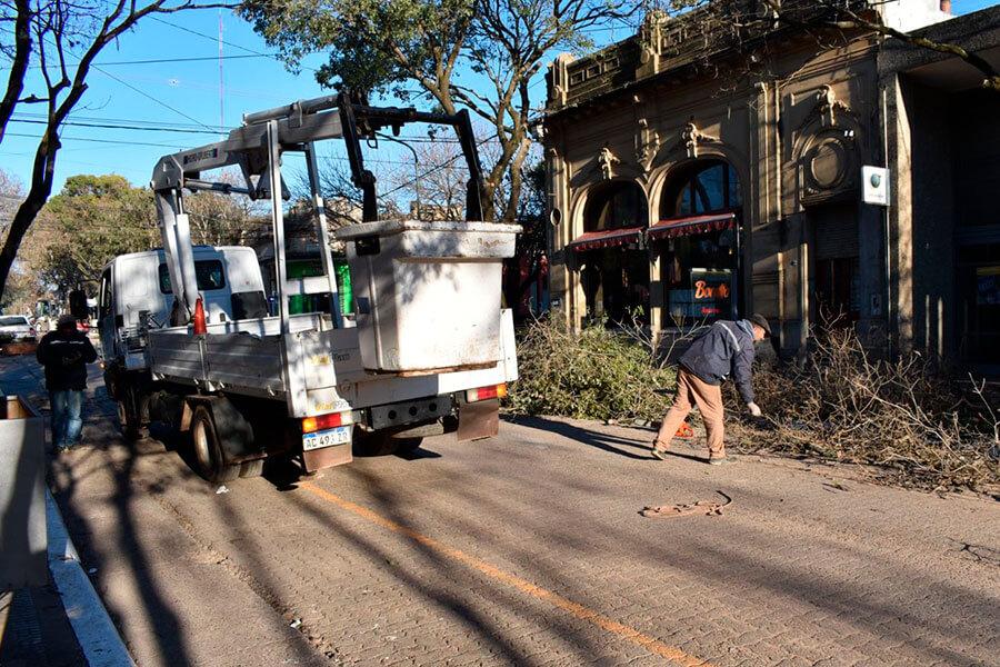 Se realizan podas correctivas y reforestación en distintos puntos de Colón